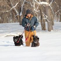 *冬/雪の中のお散歩風景。アトレーユには6匹の犬たちが暮らしています。