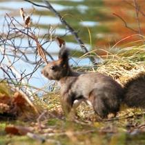 *秋/秋のお散歩は、野生動物に出会える可能性が高いですよ♪