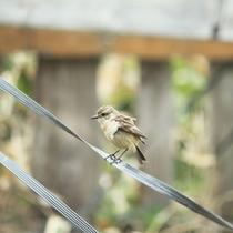 *施設の様子/アトレーユのお庭にはこんなかわいい小鳥も遊びに来ますよ♪