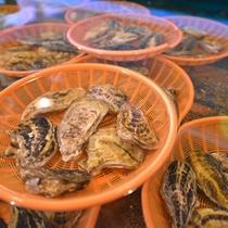 """*海鮮市場""""蒸し釜や""""/蒸しても、生ガキとして食べても美味しい!"""