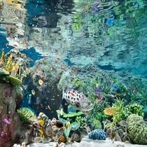 ■名古屋港水族館:サンゴ礁大水槽