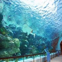 ■名古屋港水族館:サンゴ礁大水槽2