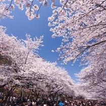 ◆上野恩賜公園