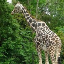 """*【周辺観光】「アニマルキングダム」たくさんの動物と出会える!""""体験型動物園""""♪"""