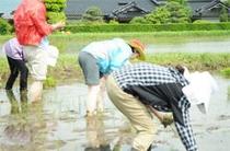 【農業体験】田植え、稲刈り、椎茸取りなど20種類の農業体験。