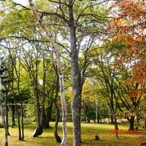 樅の木山荘の紅葉になります