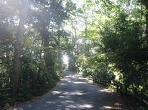 森林浴遊歩道