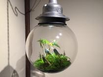 LED盆栽