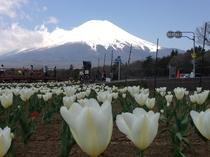 山中湖花の都公園の春