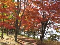 【紅葉まつり】