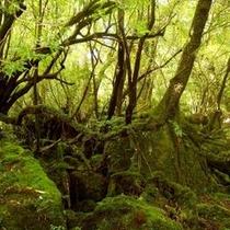 白谷の苔むす森