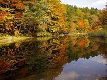薬研渓流の紅葉(例年の見頃は10月中旬~下旬) 当館より約20km・お車にて30分程です。