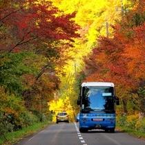 紅葉かっぱバス(秋)