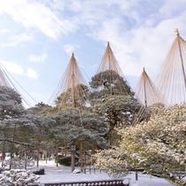 【観光情報】冬の兼六園 雪つり
