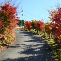 *秋イメージ。紅葉がきれいです
