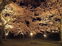 さくらの里夜桜ライトアップ(当ホテルから車で30分)