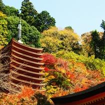 【談山神社・秋】当館すぐ裏の談山神社。期間限定で紅葉の夜間ライトアップも行われます。