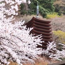【談山神社・春】当館すぐ裏の談山神社。たくさんの桜が咲き誇ります。