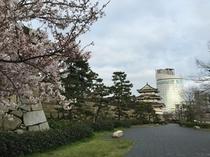 玉藻公園の桜
