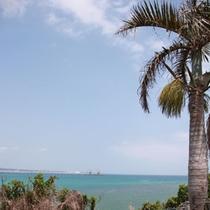庭の椰子の木