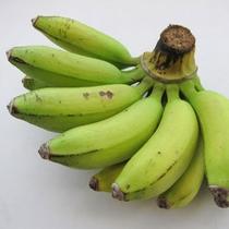 島バナナ(沖縄の果物)