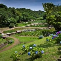 初夏には里山水生園のあじさいが咲き誇ります