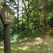熊野古道★森林浴