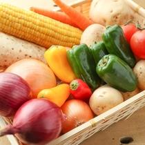 北海道産の野菜を使った料理を提供しています。