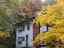 広いお庭 春は、新緑 夏は、マイナスイオン 秋は、紅葉  テラスでゆったり