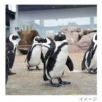 京都水族館penguin