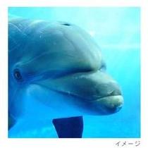 京都水族館dolphin