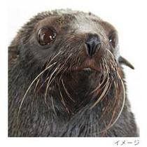 京都水族館fur-seal