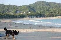 弓ヶ浜で散歩