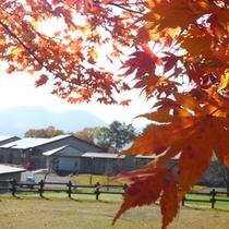 *【周辺(秋)】きれいな空気と水と緑が育んだ紅葉美をご覧になりながら、お過ごし下さい。