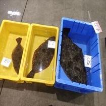 沼津魚市場 駿河湾、相模湾は全国的にも最高クラスの漁場です