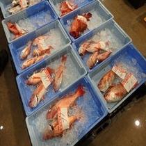 沼津魚市場 旬の魚には徹底的にこだわります!