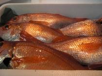 高級魚赤むつ もはや言葉にならないほどの旨い魚!