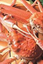 冬の味覚 越前蟹