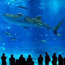 美ら海水族館大水槽【車で約55分】
