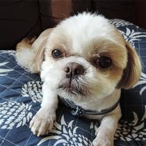 *看板犬ジュッピー/今日も1日おつかれさま。みなさまのお帰りを待ってるわん!