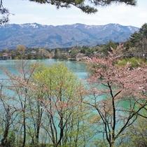 *四季折々の顔を見せる桜ヶ池。
