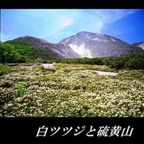 ツツジと硫黄山 (4)
