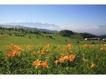 車山高原のニッコウキスゲ