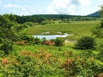 八島湿原 八島ヶ池