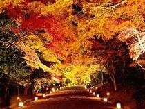 秋の日吉大社