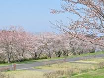 【周辺:長沼フートピア公園】春にはたくさんの桜が咲きます