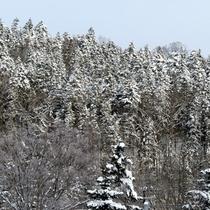 *近くの林も雪化粧