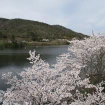 春の風景~桜