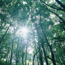 【夏の北湯沢】夏の太陽と緑林の間を流れる涼しい風。当館を出てすぐに大自然と出会うことができます。