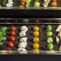 【ブッフェ】カラフルな野菜たち。緑の風畑から収穫して4種のディップ&ソースでどうぞ。
